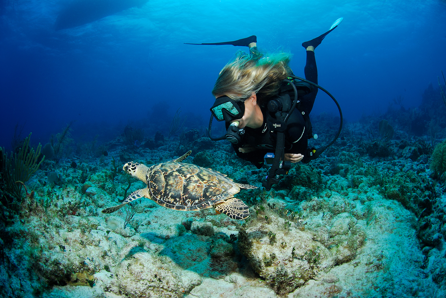 Cayman Brac: The Best Shore Diving In The Caribbean