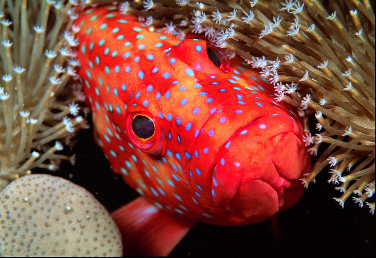 Fish Photography | X-Ray International Dive Magazine