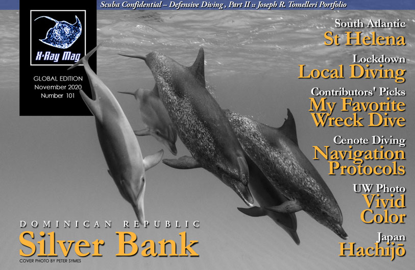 Cover image by Peter Symes | Dolphins off Bahamas