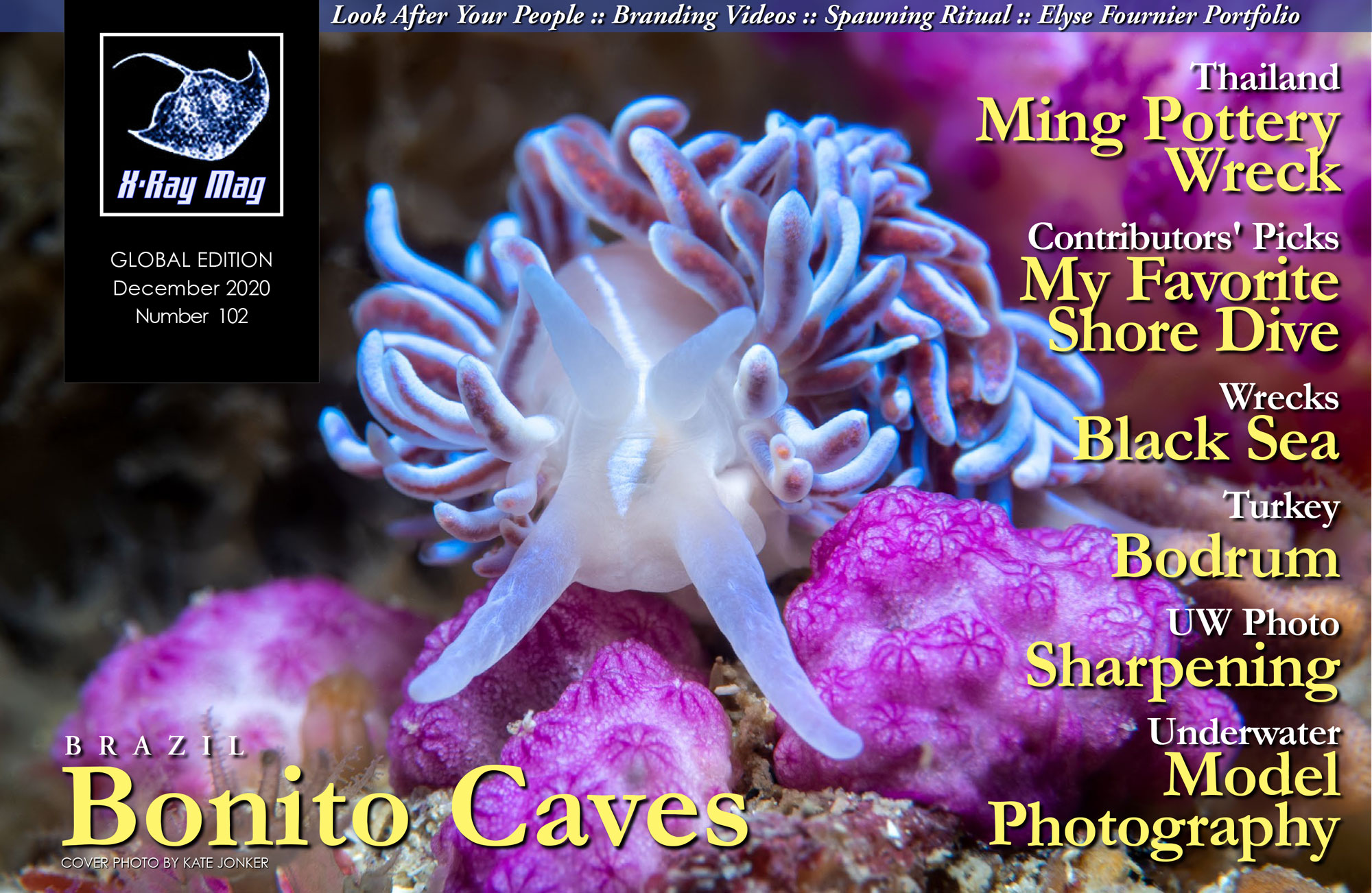 Cover image by Kate Jonker | Coral nudibranch (Phyllodesmium horridum), Coral Gardens, Rooi Els, Cape Town, South Africa