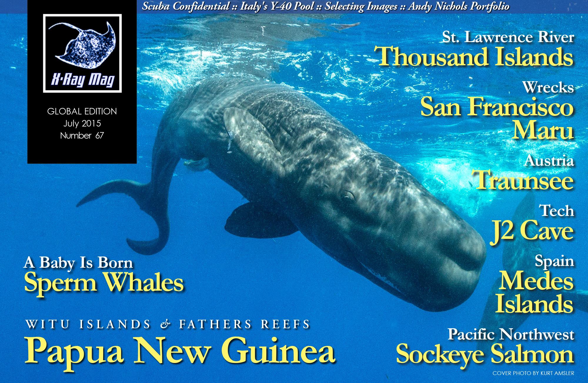c4003583fcf4 A world first  Kurt Amsler documents the birth of a sperm whale
