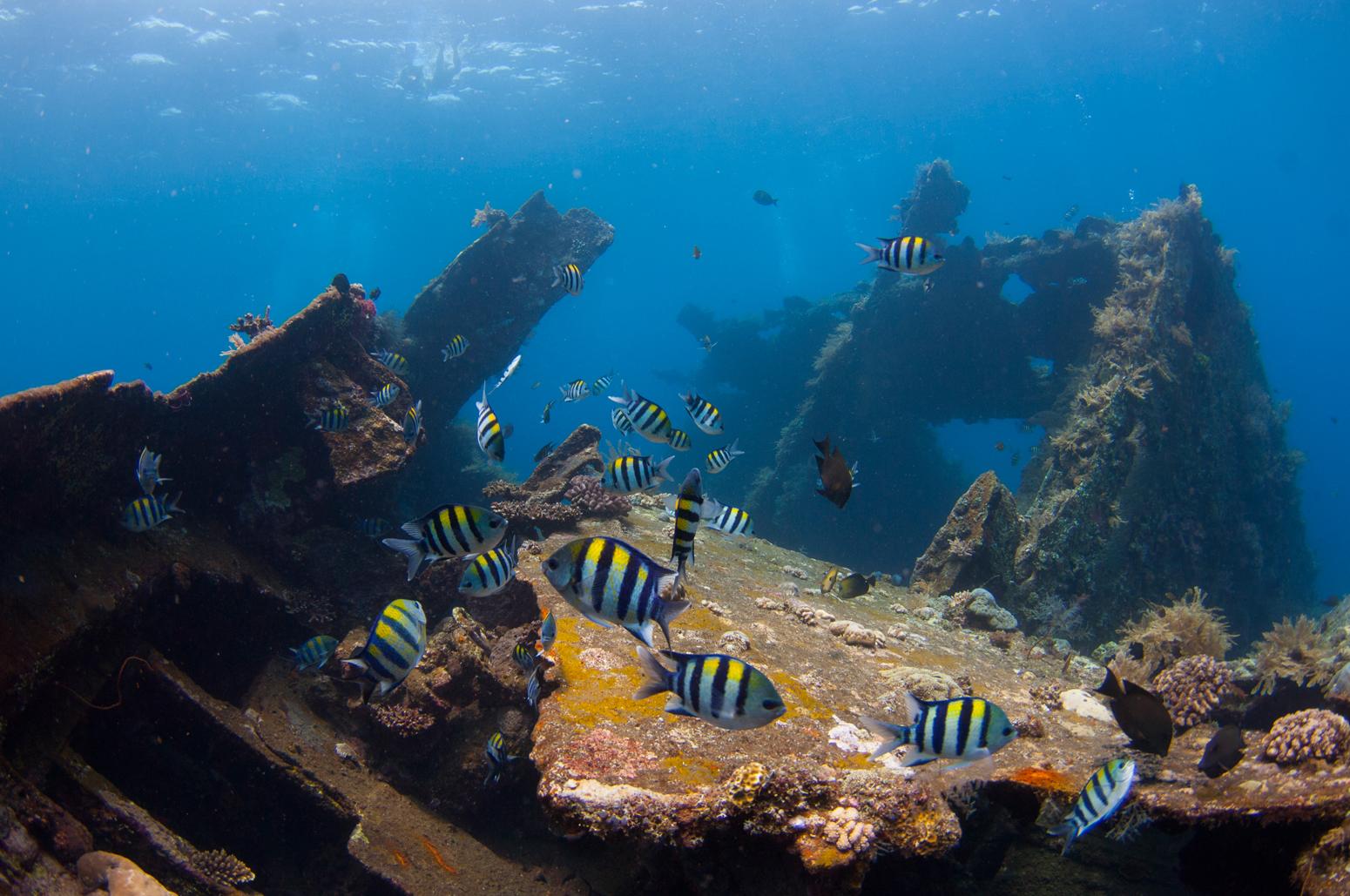 Bali's Tulamben: Muck Diving Heaven | X-Ray Mag