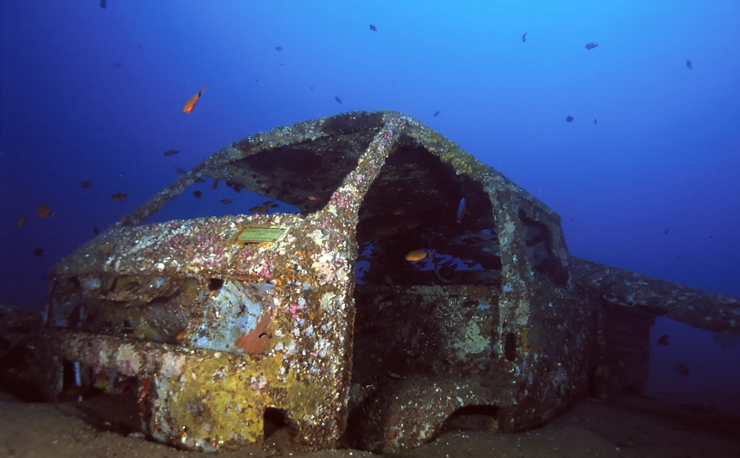 philippines diving the visayas x ray mag