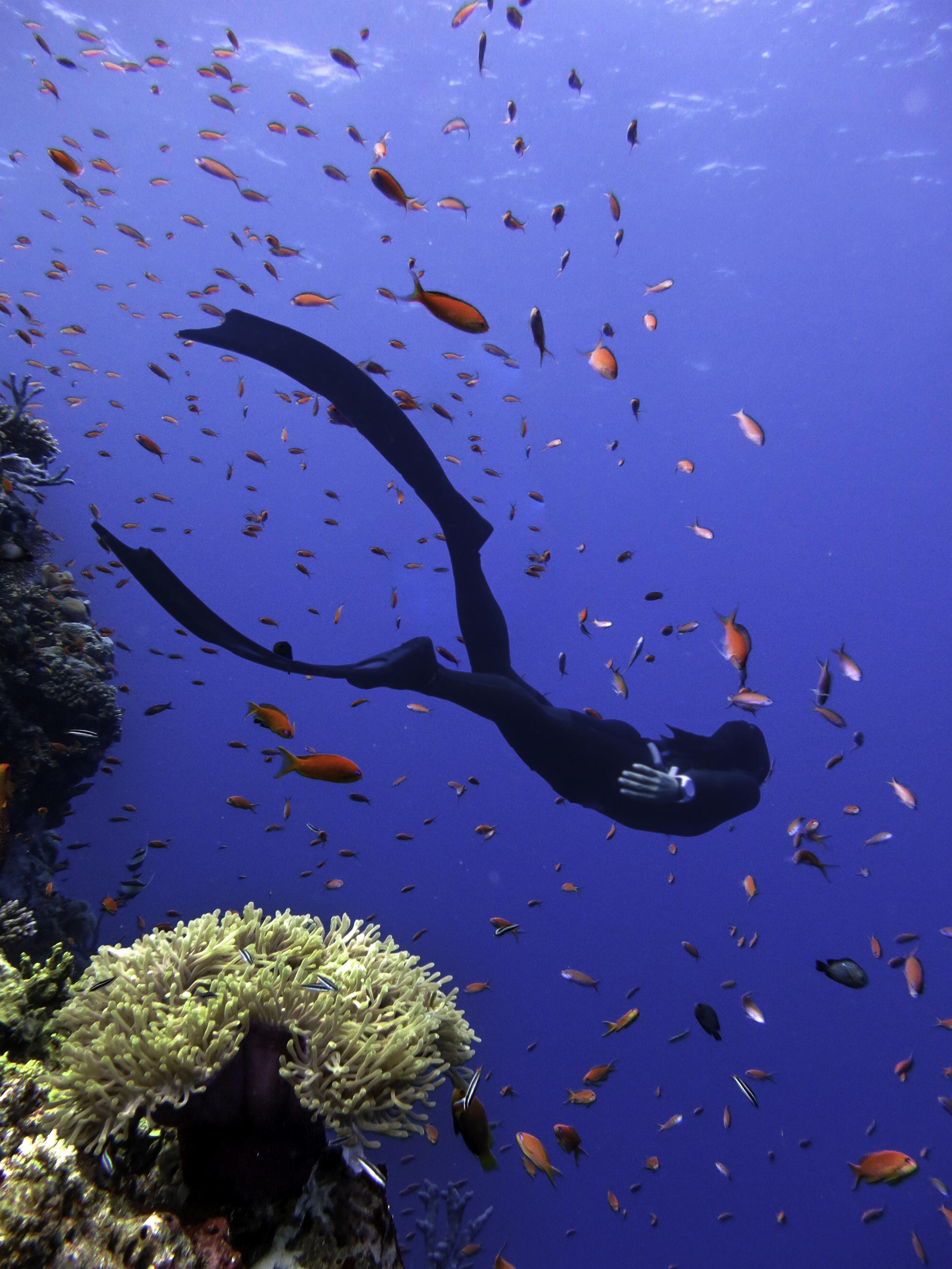 Anantara Resorts Opens First PADI-Certified Free Diving