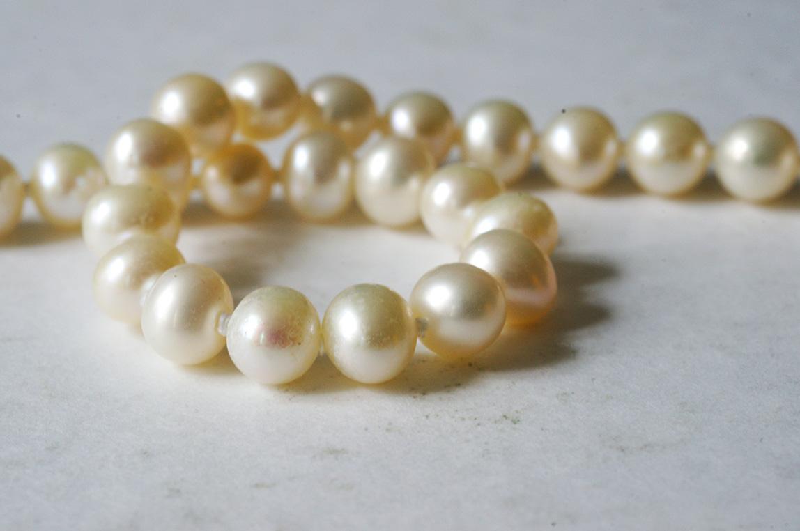 how do oysters make pearls wwwpixsharkcom images