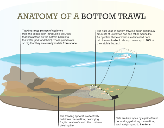 Anatomy Of A Bottom Trawl X Ray International Dive Magazine