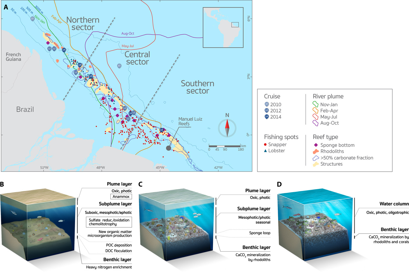 Extensive reef system discovered at the Amazon River mouth | X-Ray ...