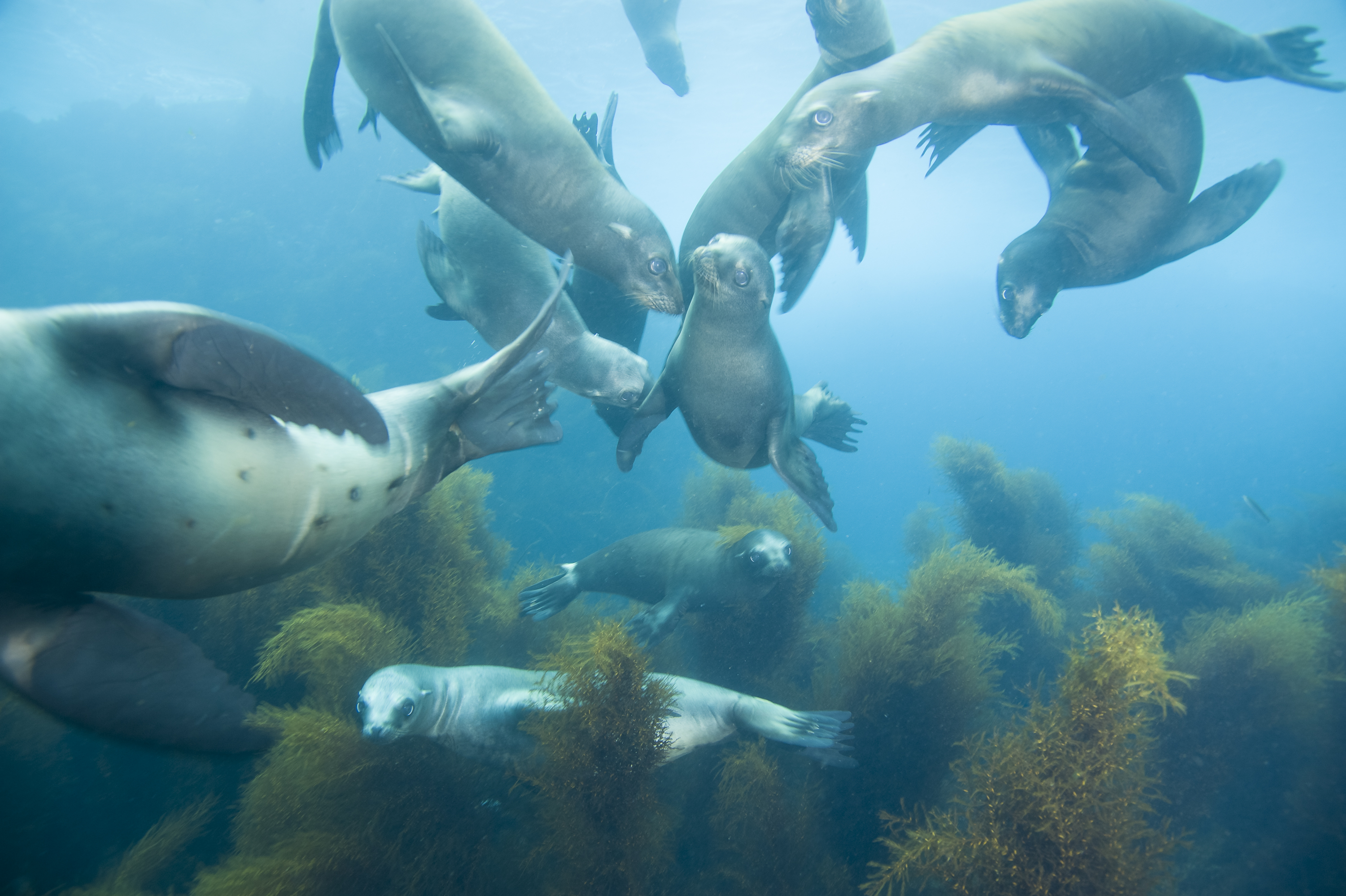 California sea lions at Coronado Islands, Mexico, by Matthew Meier