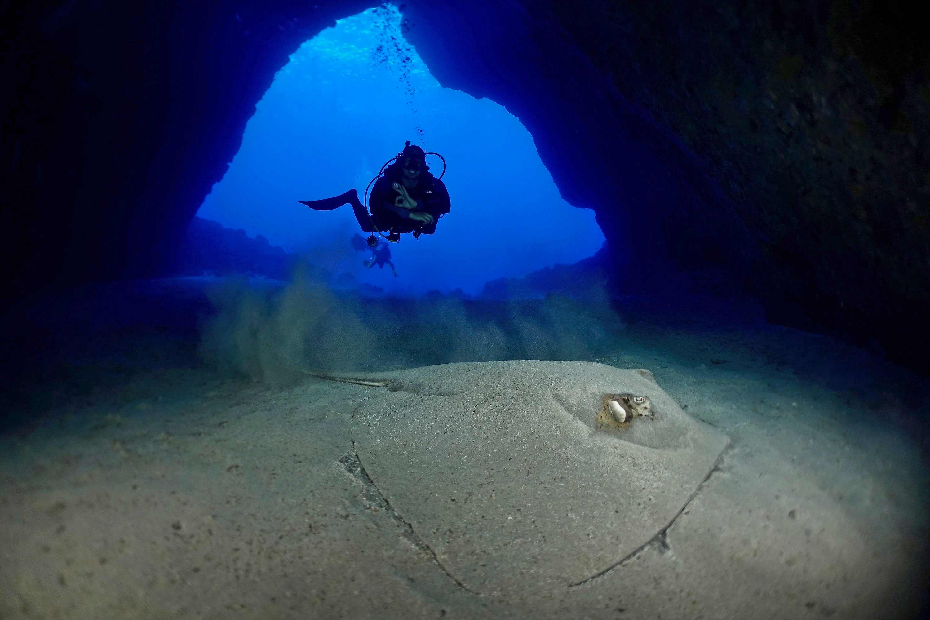 Diver with southern stingray in Caverna da Sapata. Photo by Pierre Constant