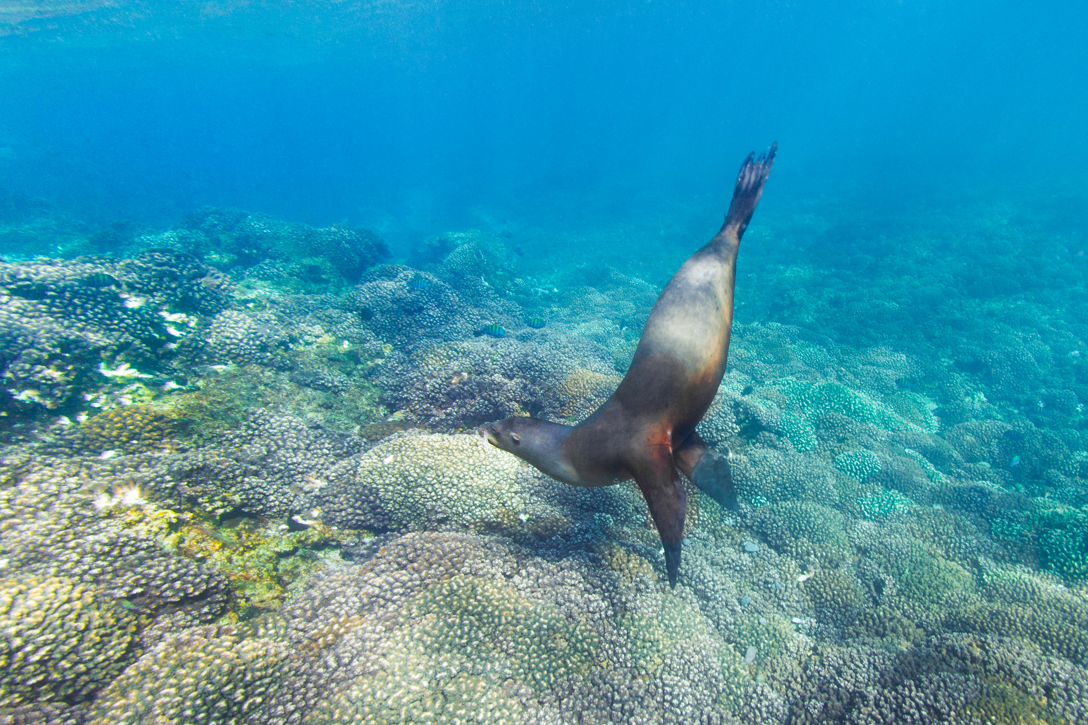 Sea lion at Cabo San Lucas, Mexico, by Kate Holt
