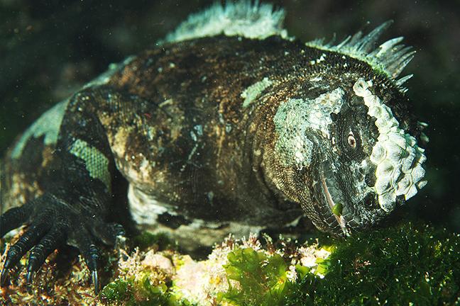 Pdf iguana the the of night