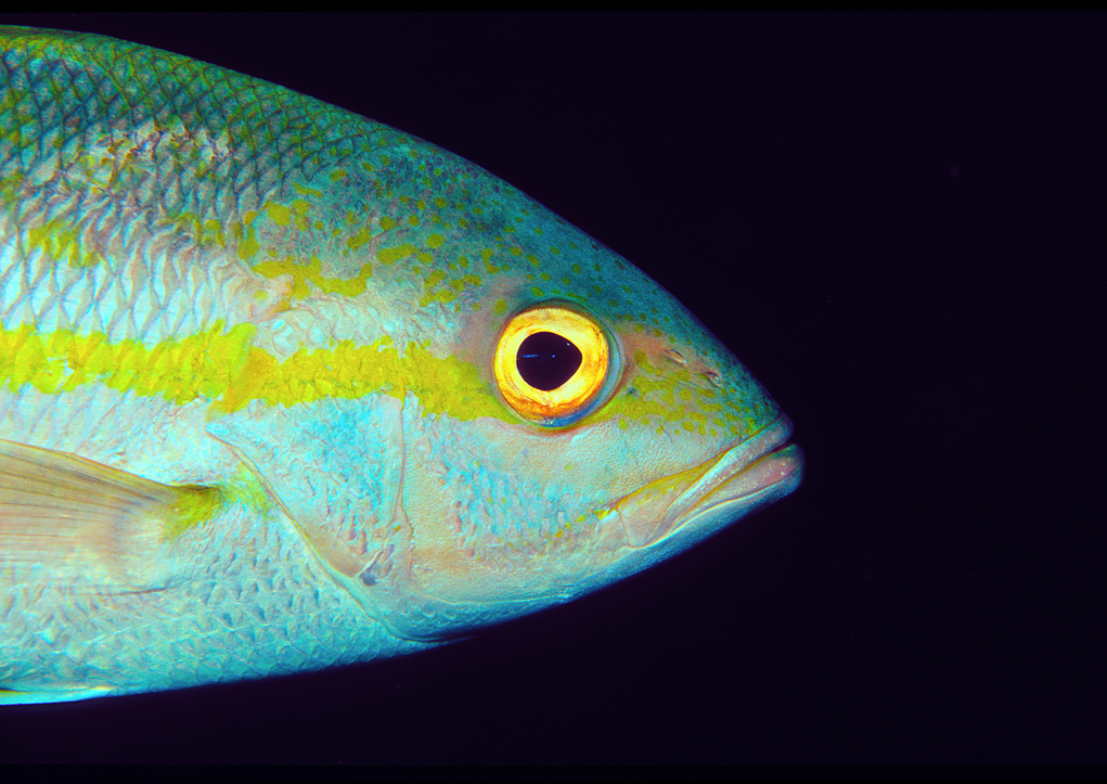 Fish fashion x ray mag for Fish eye skin