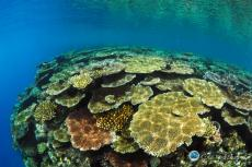 Corals in the Pacific Ocean