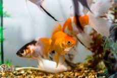 Individual fish can be identified based on their behaviour and movements